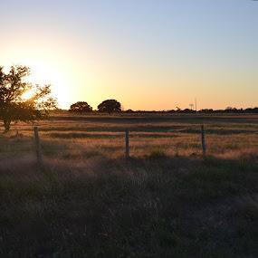 Texas Sunset by Cal Johnson - Landscapes Sunsets & Sunrises ( tree, sunset, texas, road, travel )