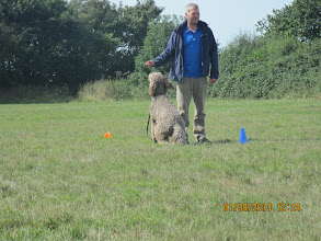 Photo: Add a Cue game with Paul and Brian Labradoodle