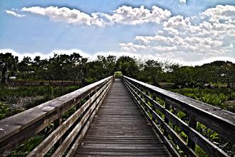 Photo: Surrealistic Pathway @ Wakodahatchee Wetlands, FL - http://photo.leptians.net