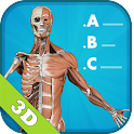 Anatomy Quiz - muscles & bones