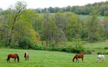 Photo: My herd of horses in the pasture this spring...Lyric, Kira, Sami and Dusty.