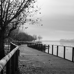 Calma by Carlos Costa - Black & White Landscapes ( park, tree, wood, calmness, black and white, aveiro, trees, walkway, portugal,  )