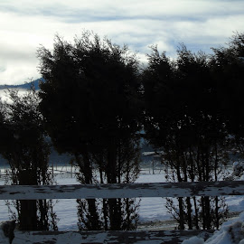 REFLECTION by Cynthia Dodd - Novices Only Landscapes ( clouds, water, winter, sky, ice, snow, trees, landscape )