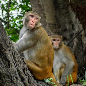 Monkeys by Akshay K - Animals Other Mammals ( forest, monkey, green, two, friends,  )