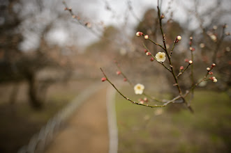 """Photo: This photo appeared in an article on my blog on Feb 24, 2013. この写真は2月24日ブログの記事に載りました。 """"Plum Orchard at the Kitano Tenmangu Shrine: Not Quite Prime Time"""" http://regex.info/blog/2013-02-24/2215"""
