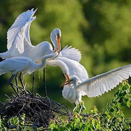 by William Wu - Animals Birds