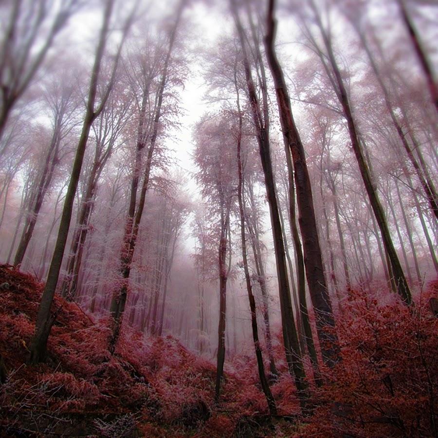 Look in my Woods by Jadranka Bužimkić - Landscapes Forests