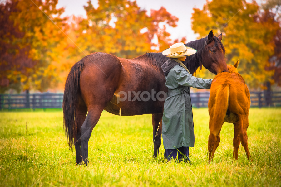 Tranquility in the herd by Penny Miller - Animals Horses ( pasture, herd, cowgirl, quarter horse, mare and colt )