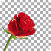 Auto Background Remover (Changer)