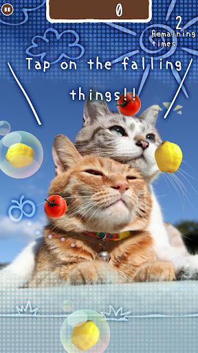 zen-cat 1.0.3 Windows u7528 2