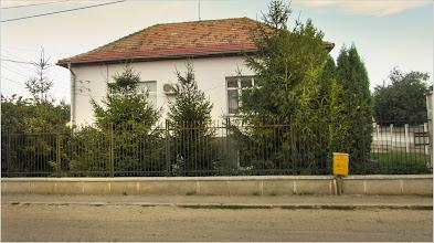 Photo: Conifere - de pe Str. Putna - 2017.08.27