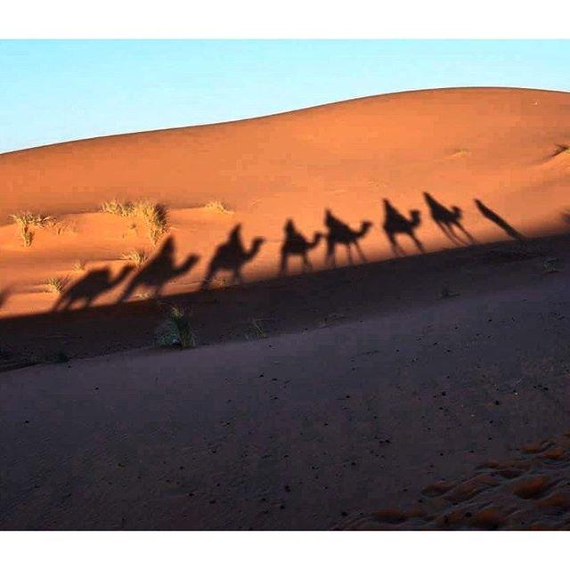 Tra le dune del deserto! 🐪 🐪   #fcb  #istagram #likeforlike #like4like #ig_masterpiece #africa #discovermaroc #istapic #happiness #instalikes #lviaggiare #l #l4l #lforl #istagood #istadaily #istagood #istago #rabat  #meknes #fes #marrakech #italiang di Wica