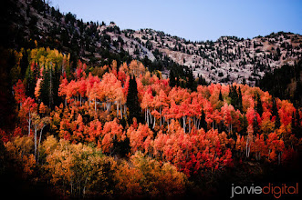 Photo: For the following reasons  Because it's fall Because it has recently snowed in the mountains Because fall won't last much longer Because I have beautiful mountains all around me Because an amazing canyon is 10 minutes from my house Because I leave in a little over a day for another trip out of state Because I need to shoot more fall colors Because I went to bed early last night (12:30) Because I love leisurely drives and my amazing car Because photography makes me happy  I am out the door at 7:04 to make more pictures like last year below.