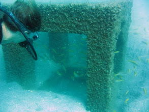 Photo: Antitrolling Block and school of Brown-striped Snapper