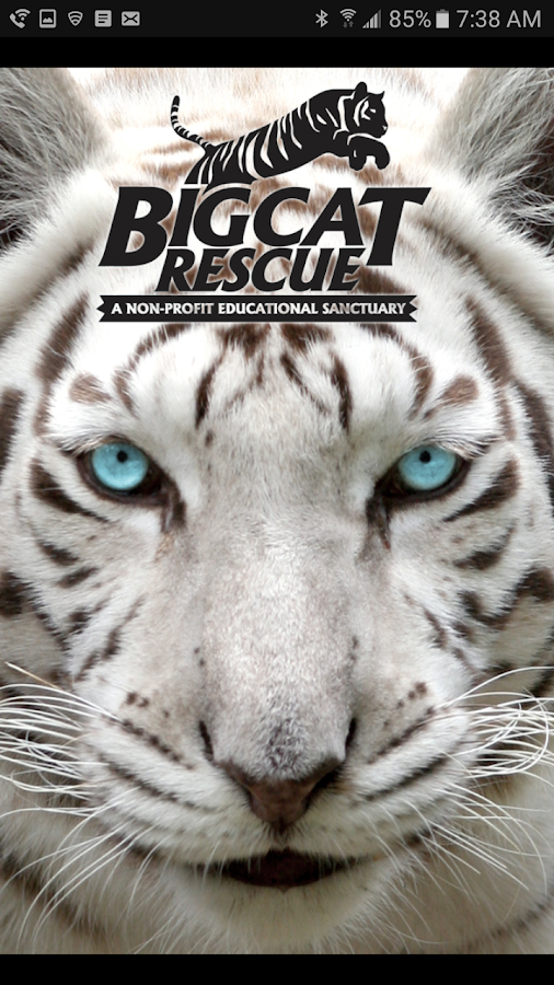 Big Cat Rescue- screenshot