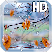 Autumn Raindrops Live HD