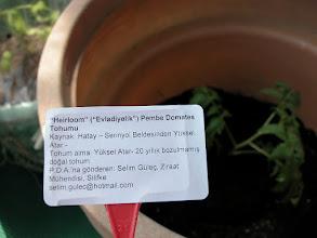 Photo: Sanki bir cok saksımız olacakmış da pembe türlerini birbirine karıştıracakmışız gibi; etiketini de yapıştırıp, bu Hatay tohumlarını bize yollayan Selim Bey'i hayırla anarak- haydi hayırlısı bakalım diyoruz!