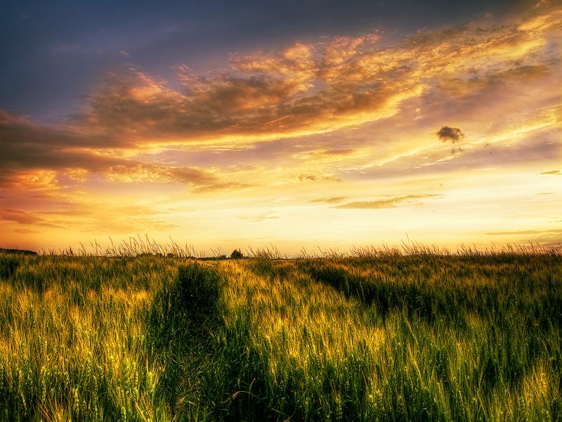 Photo: Summer wheatlands pt.IV.
