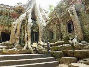 Photo: CAMBODGE, Angkor-Le temple Ta Prohm est envahi par les fromagers (Unesco).