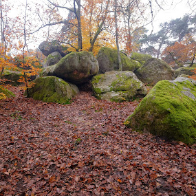 in the forest by Fred Goldstein - Landscapes Forests ( fontainebleau, france, forest, rocks,  )