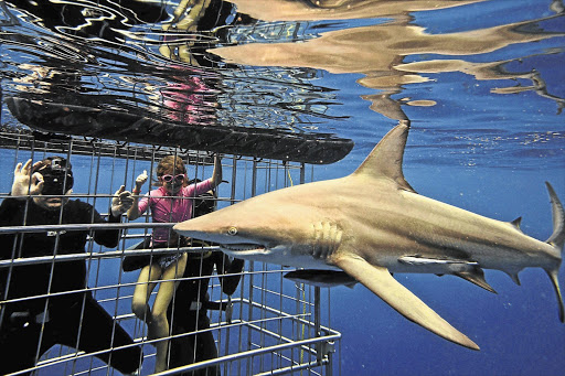 A shark might be great to look through a cage, but it could be tiring for them.