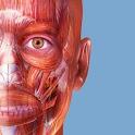 Muscle Premium - Human Anatomy, Kinesiology, Bones icon