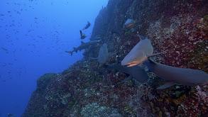 Socorro Islands thumbnail