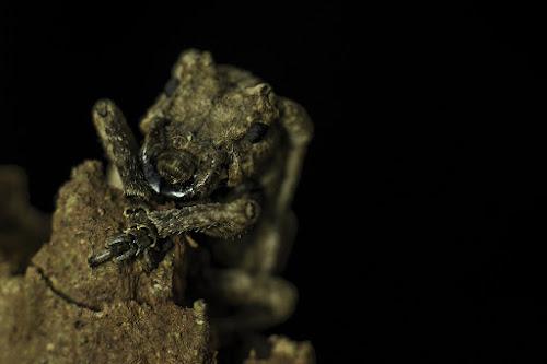 Macro by Himanshu Jethva - Animals Insects & Spiders ( macro, dang, near, macro photography, india, insect, closeup, eyes )