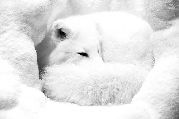 Foxy di photofabi77