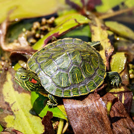 by Tim Gritzuk - Animals Reptiles