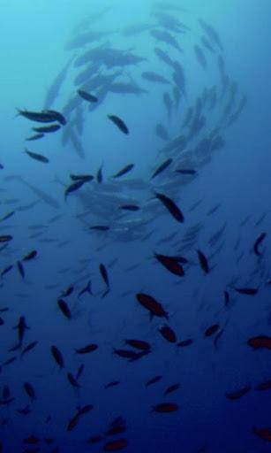 珊瑚海壁纸