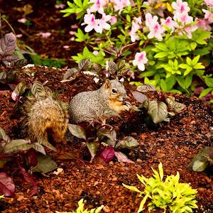squirrel.jpg (1 of 1).jpg