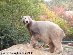 Photo: Eisbaerchen Knut beschaut sich seine Besucher ;-)