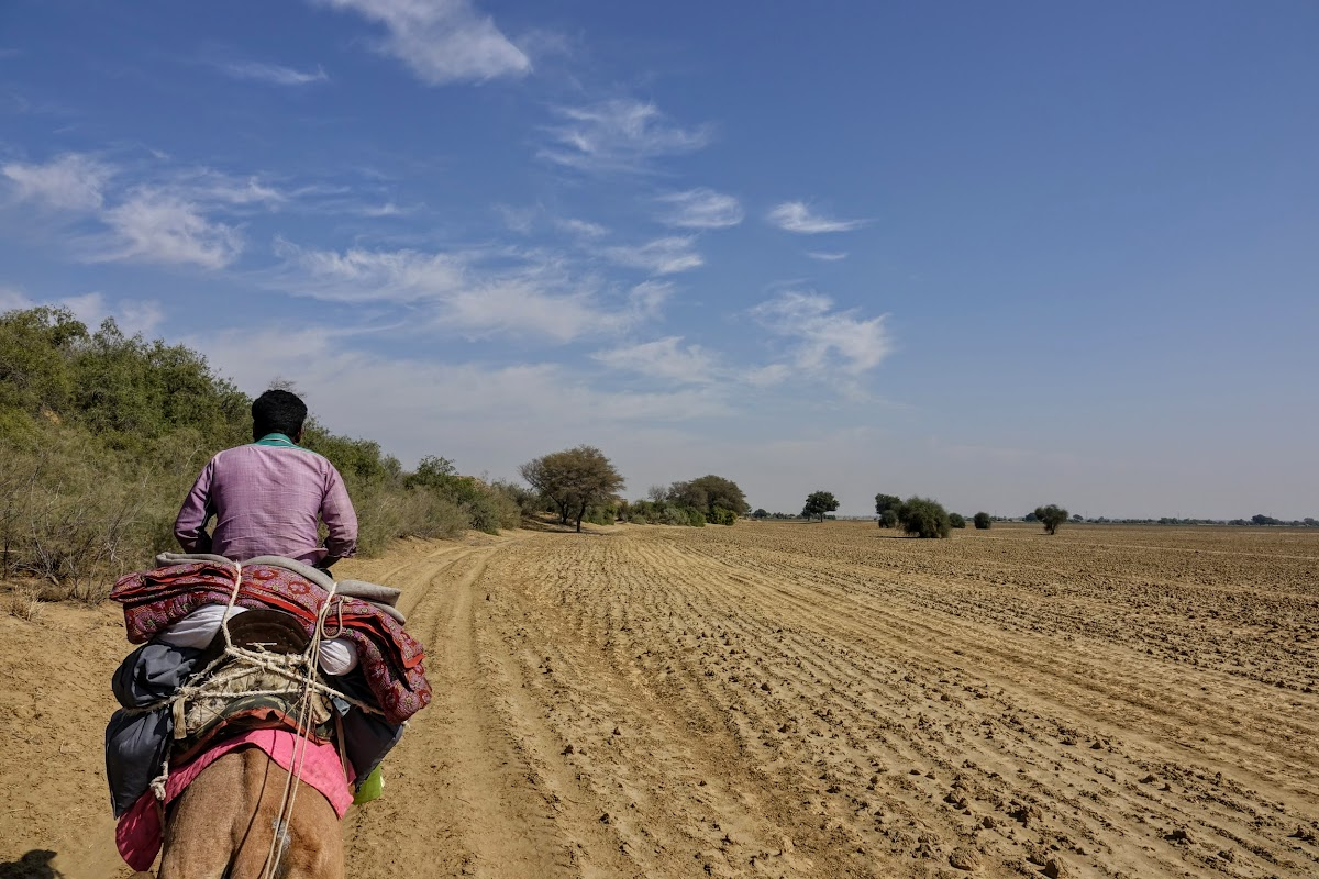 Thar. Desert Camel Trekking Day 3. Passing by dry fields, no harvest due to the drought