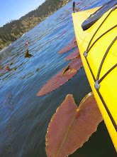 Photo: Oh happy day, the first kayak outing of the season at Triangle Lake and my friend Adrienne is my companion.. We are the only ones on the lake on this day. And I love nature's vegetation, the lily pads the color of them is so eye-catching.