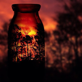 Sunset in a jar by Pamela Hammer - Digital Art Abstract ( orange, tree, jar, sunset, digital art )