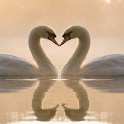 Romantic Love Pics HD icon