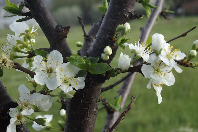 È tempo di primavera  di 03lety