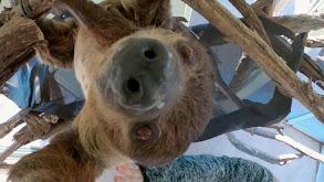 Sloth Spa Day thumbnail