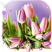 Spring Tulips live wallpaper