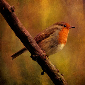 CHRISTMAS ROBIN by CLINT HUDSON - Artistic Objects Other Objects