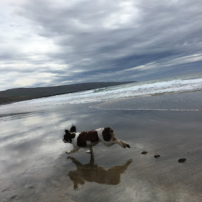 Excited about beach by Anwesh Soma - Animals - Dogs Running ( shotoniphone6s )