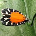 Leaf roller moth