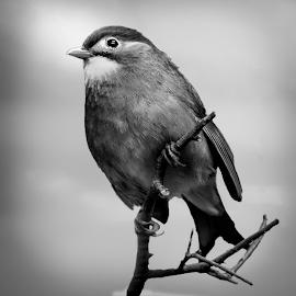 by Judy Rosanno - Black & White Animals