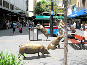 Photo: Year 2 Day 223 - Piggy Statues in Adelaide