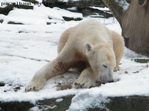 Photo: Hmmm, der Schnee ist sooo toll :-)