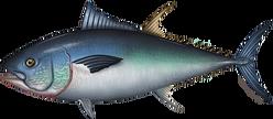 tuna_bluefin.png