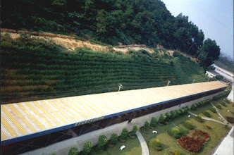 Photo: CHN-UR16 Building site in China after protection with vetiver. Note immediate slope newly planted, background slope planted earlier