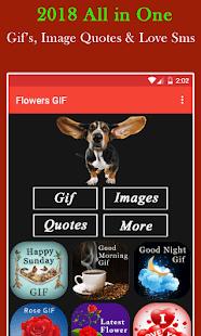 Funny GIF - náhled