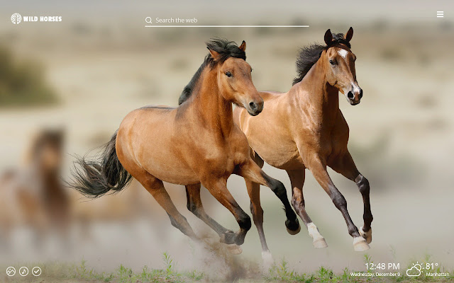 Wild Horses HD Wallpaper New Tab Theme